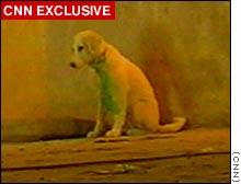 story.dog[1] (8k image)